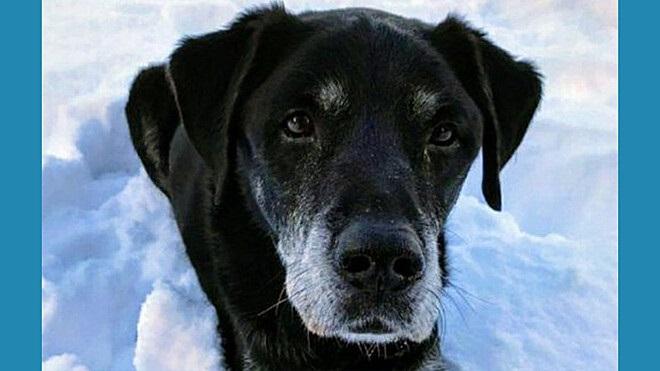 Labrador nero di nome Hugo