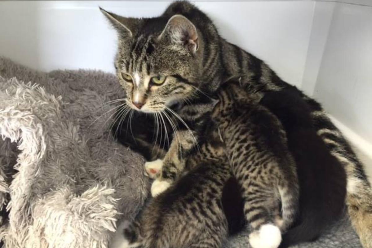 mamma gatto cuccioli