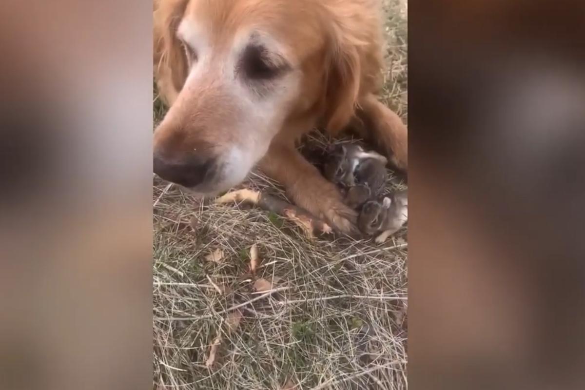 otis conigli