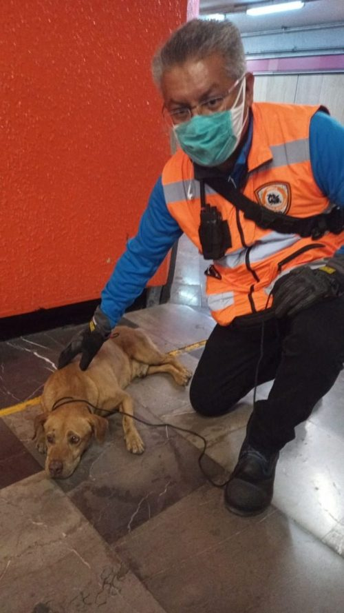 Il salvataggio del cane in metro