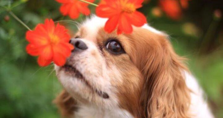 Piante pericolose per i cani