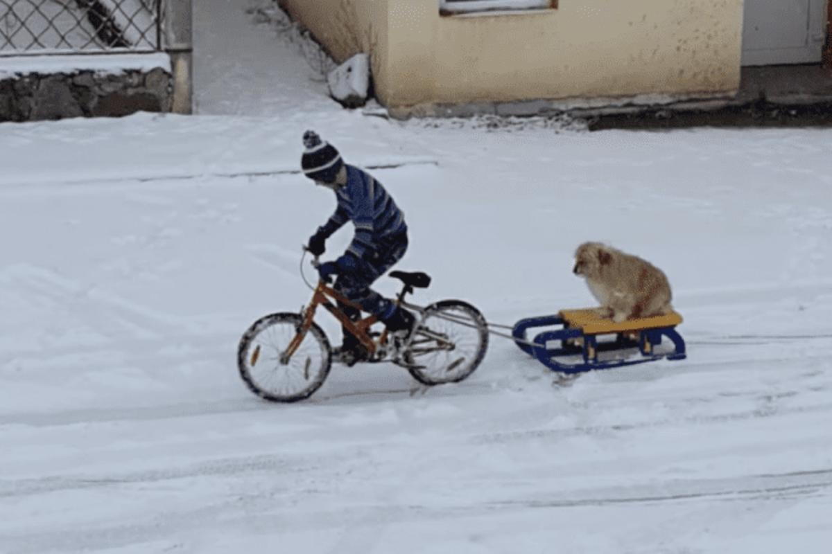 pufi bici
