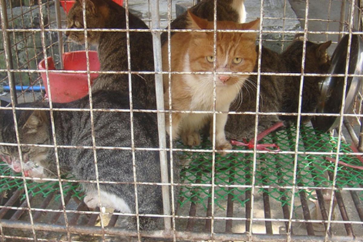 ritrovato gatto scomparso