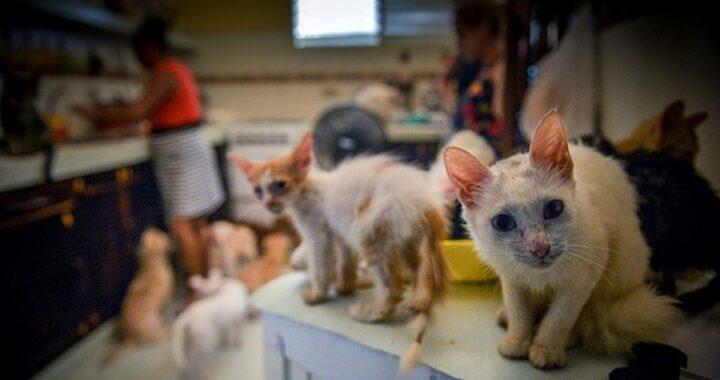 salvati 19 gatti e 3 cani