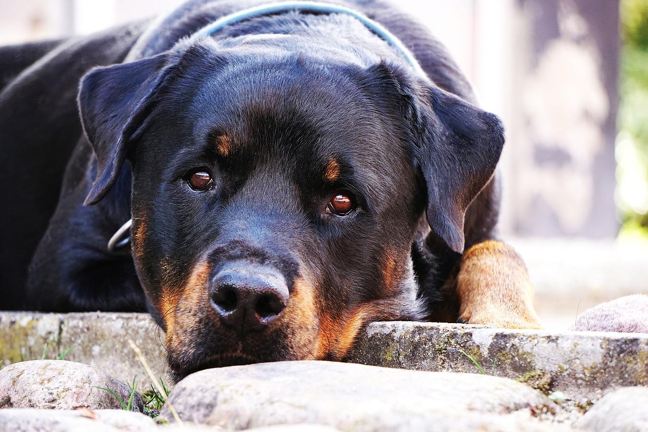 Picchia il cane: senzatetto di 46 anni denunciato
