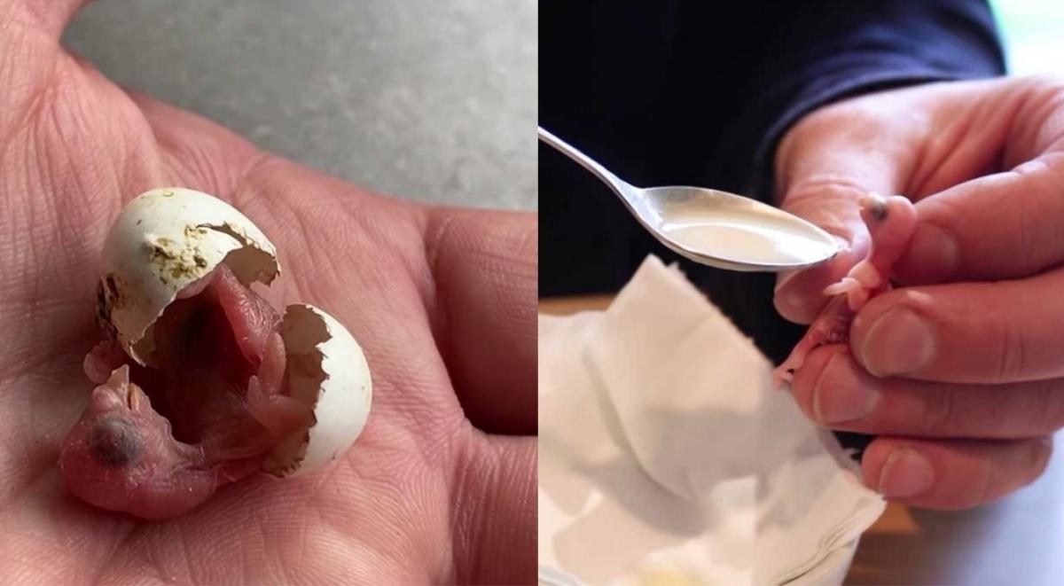 Uomo salva un uovo abbandonato