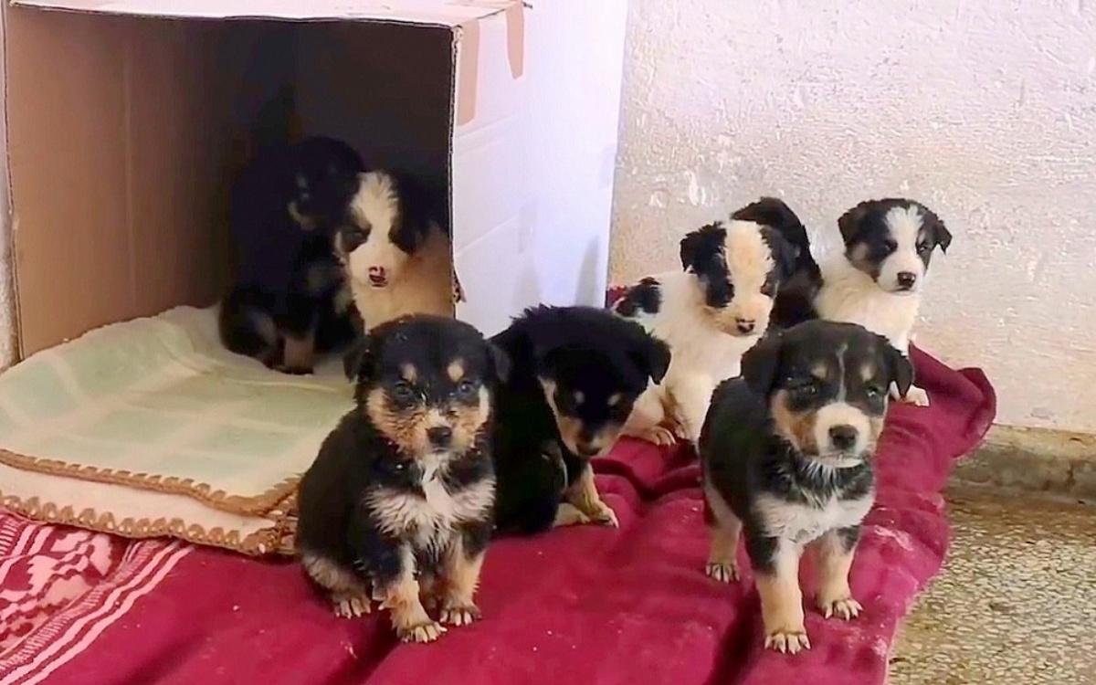 Volontari salvano la vita a 9 cuccioli appena nati