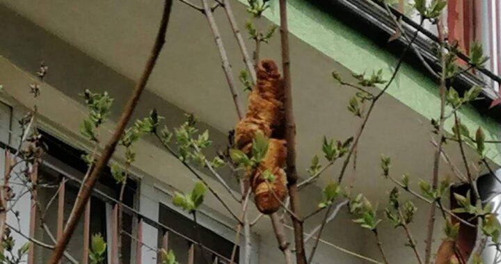 Animale misterioso intrappolato sull'albero: la sorpresa dei soccorritori
