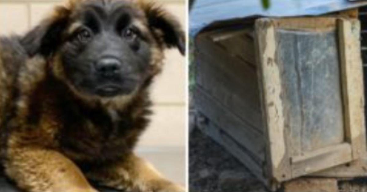 La storia del cane Baylor