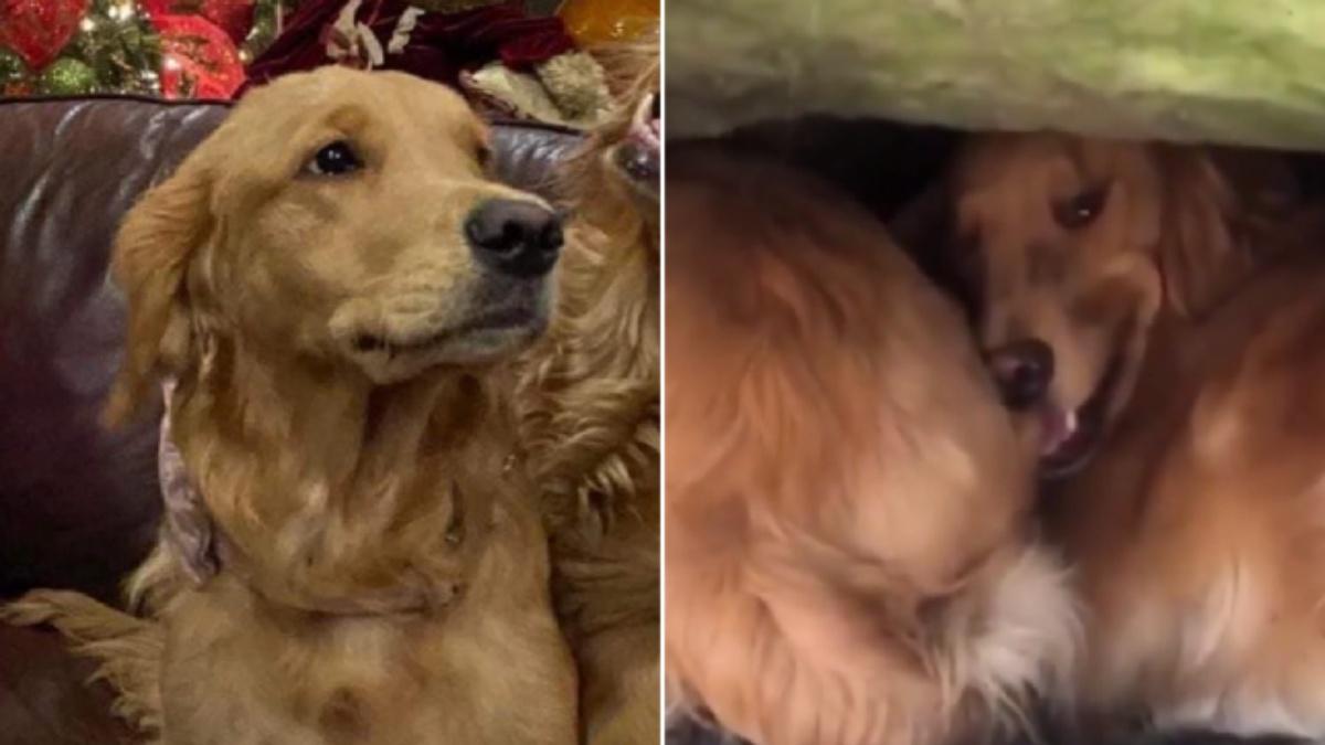 Il salvataggio del cane Brandy