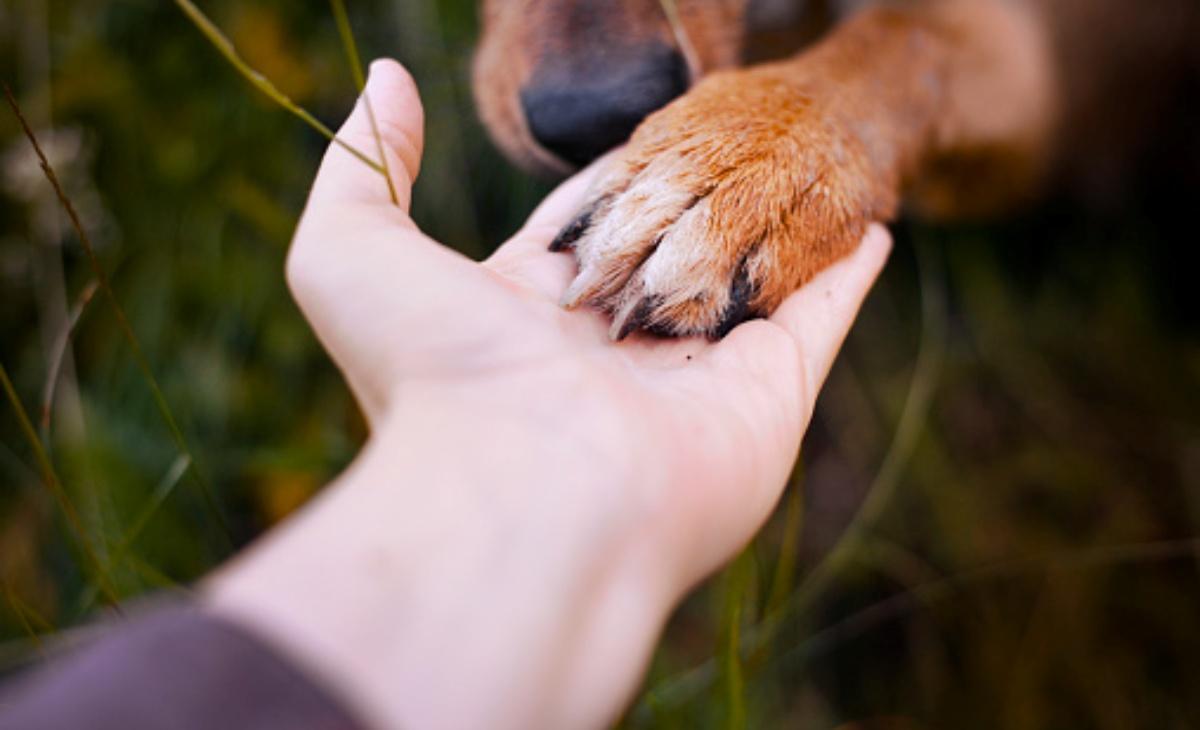 Il cane Buddie e la lapide nel parco