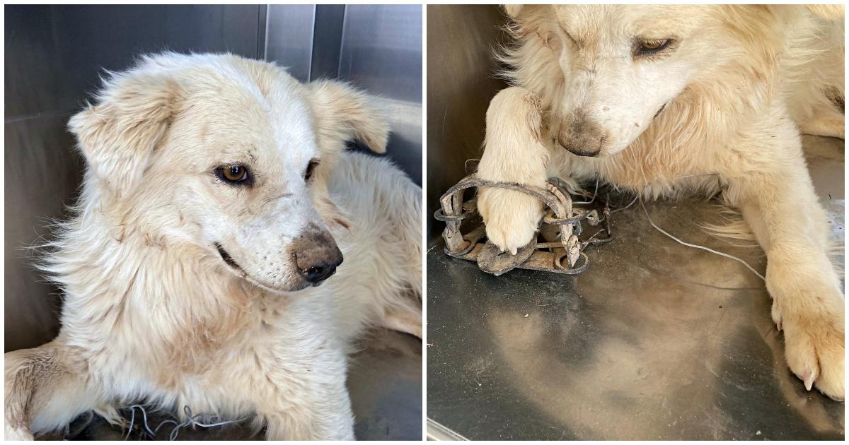 il salvataggio di un cagnolino randagio con la zampa ferita da una tagliola