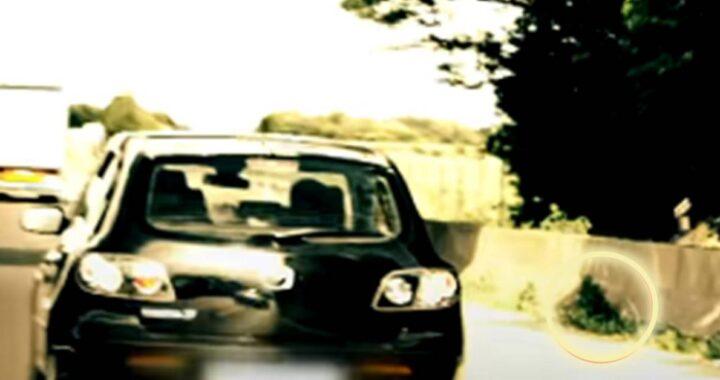 Cane lanciato da un'auto in corsa: automobilista assiste alla scena e interviene