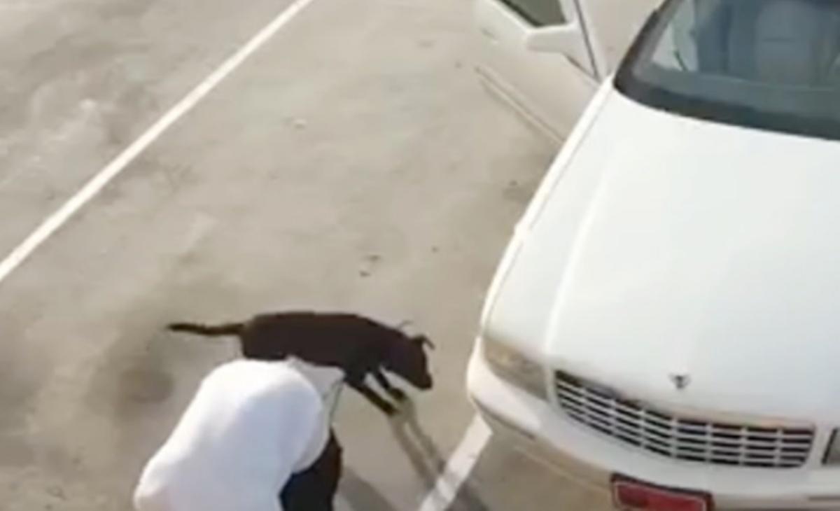 Cane nero abbandonato dal suo proprietario