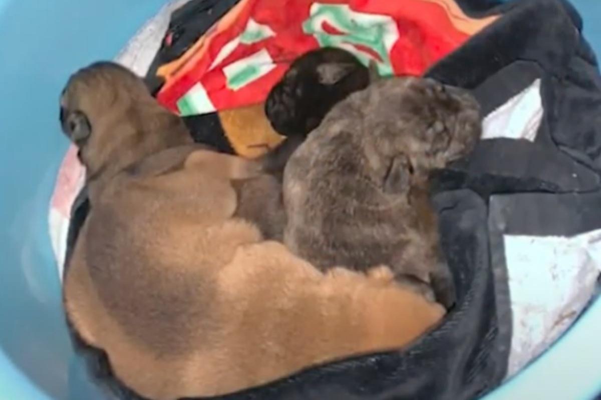 Il salvataggio di Carnitas e dei suoi cuccioli