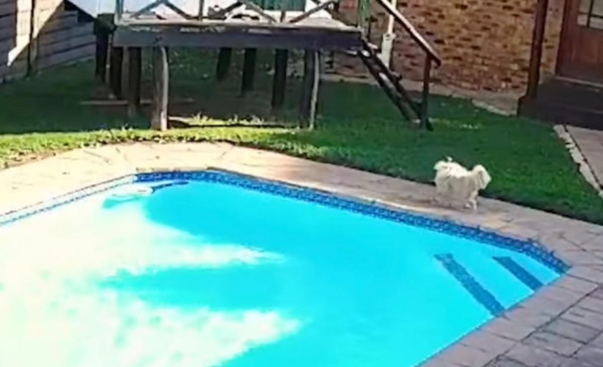 Il video dei cani Chucky e Jessie