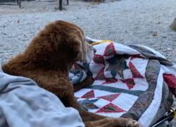 Gli ultimi istanti di vita del cane Cocoa