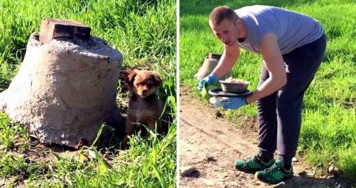 """""""Ho risposto ad una chiamata su un cucciolo abbandonato, ma quando sono andato lì, mi sono ritrovato in mezzo ad un'imboscata.."""""""