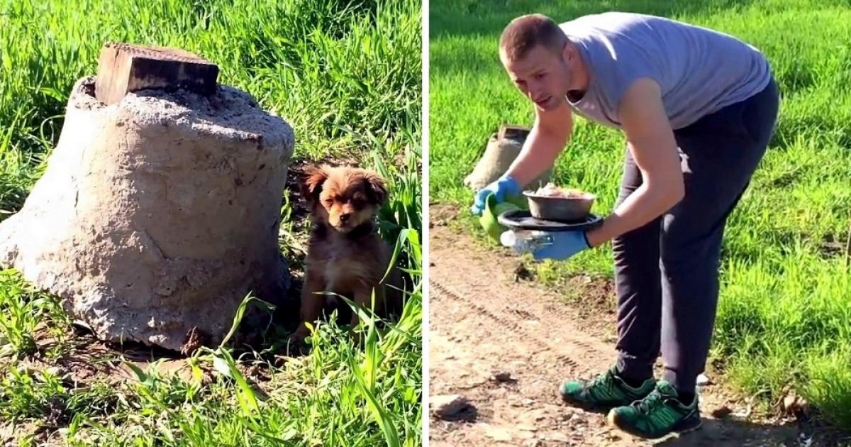 Volontario salva un cucciolo abbandonato e i suoi fratellini