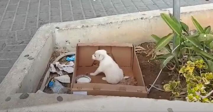 Abbandonato in una scatola di cartone fuori un negozio e ignorato dai passanti: com'è finita la storia di questo cucciolo