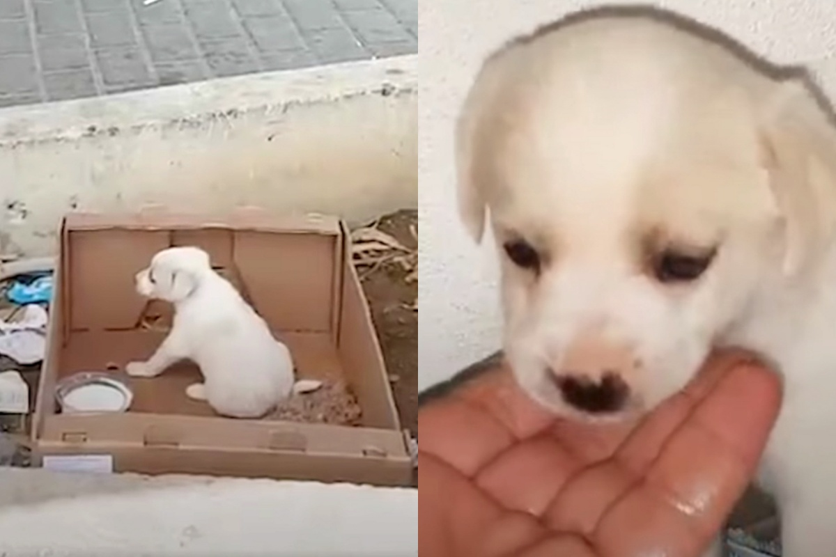 La storia di un cucciolo abbandonato in Grecia