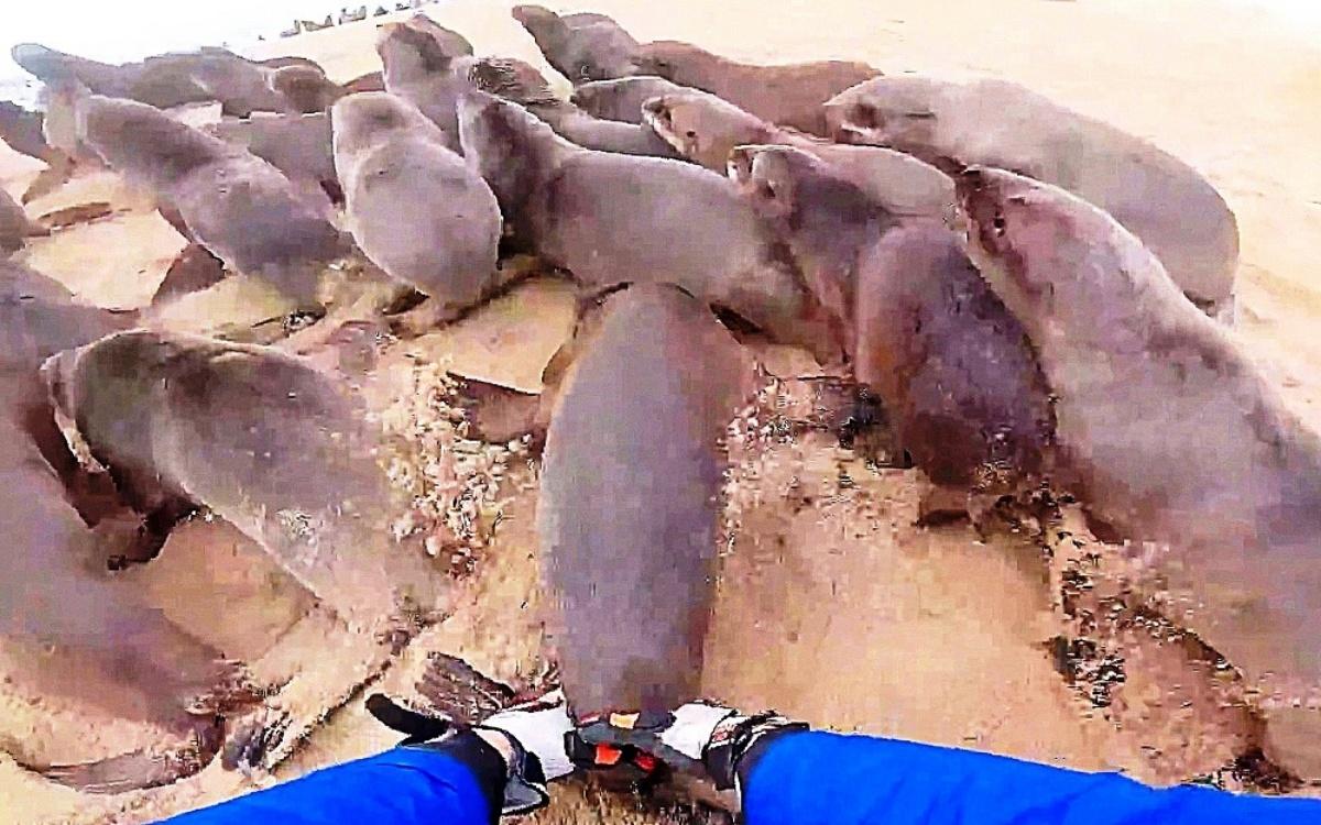 La dolce reazione di un cucciolo di foca salvato dai volontari