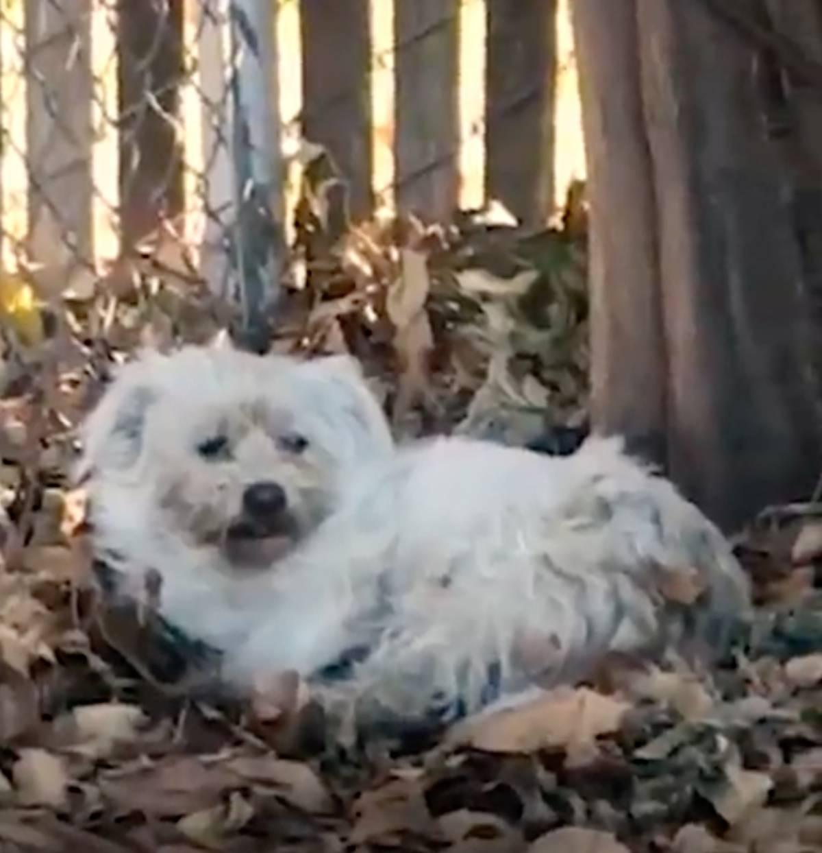 cane bianco seduto
