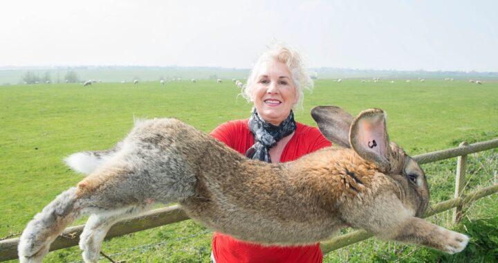 Darius, il coniglio più grande del mondo è stato rapito: Annette offre una ricompensa
