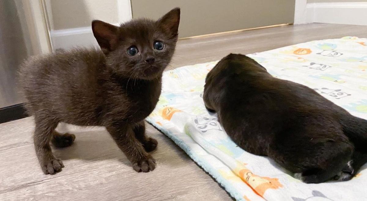 La dolcezza del gattino Frodo