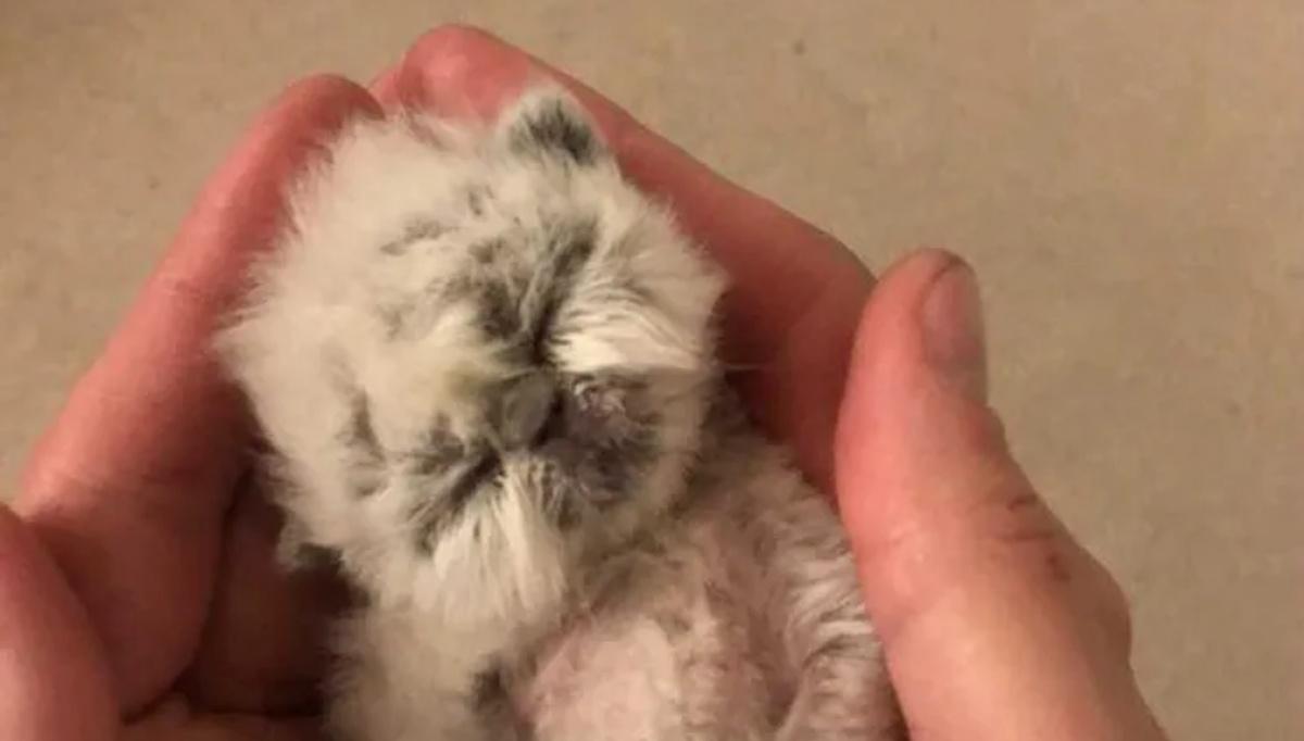 Il salvataggio del gattino Grandpa