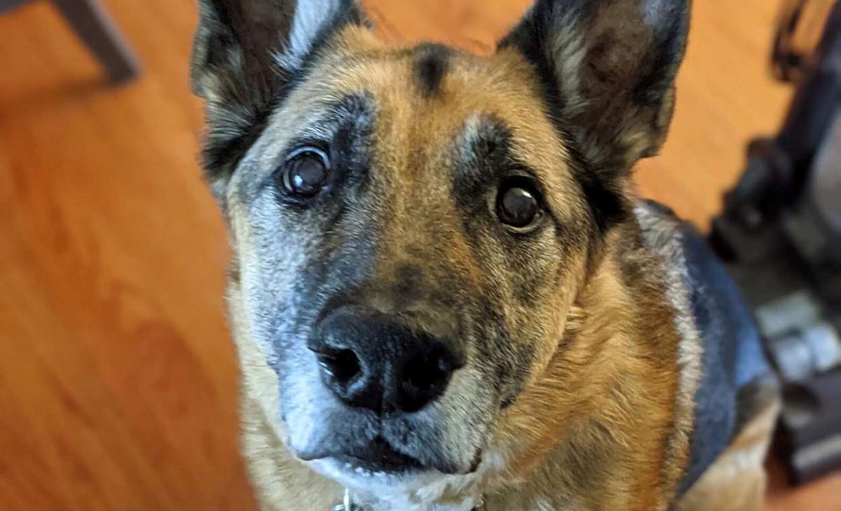 Il video del cane Heinz