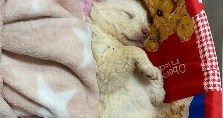 """La cucciola gettata da un'auto in corsa a Menfi sta meglio. I volontari l'hanno anche """"battezzata"""": ecco come si chiama e tutte le foto"""