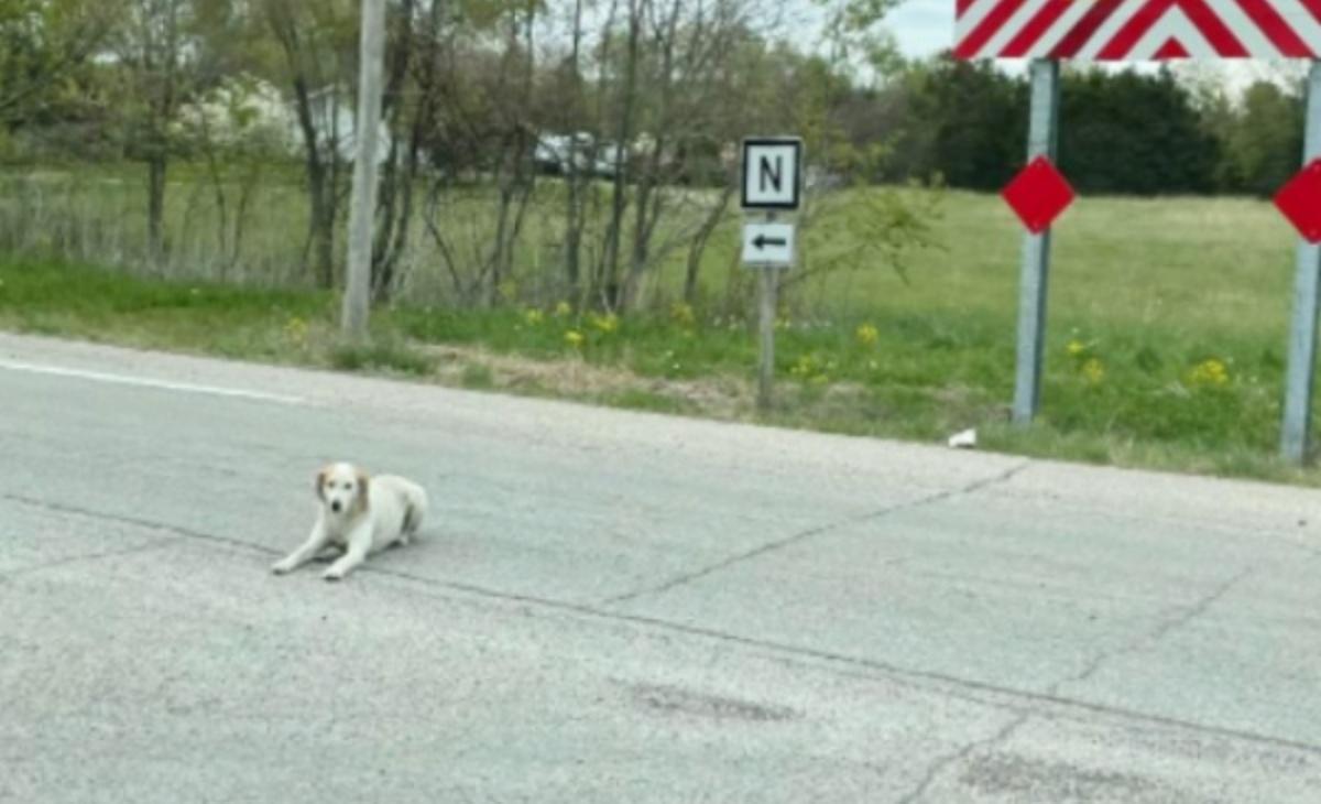 La simpatica storia del cane Ike