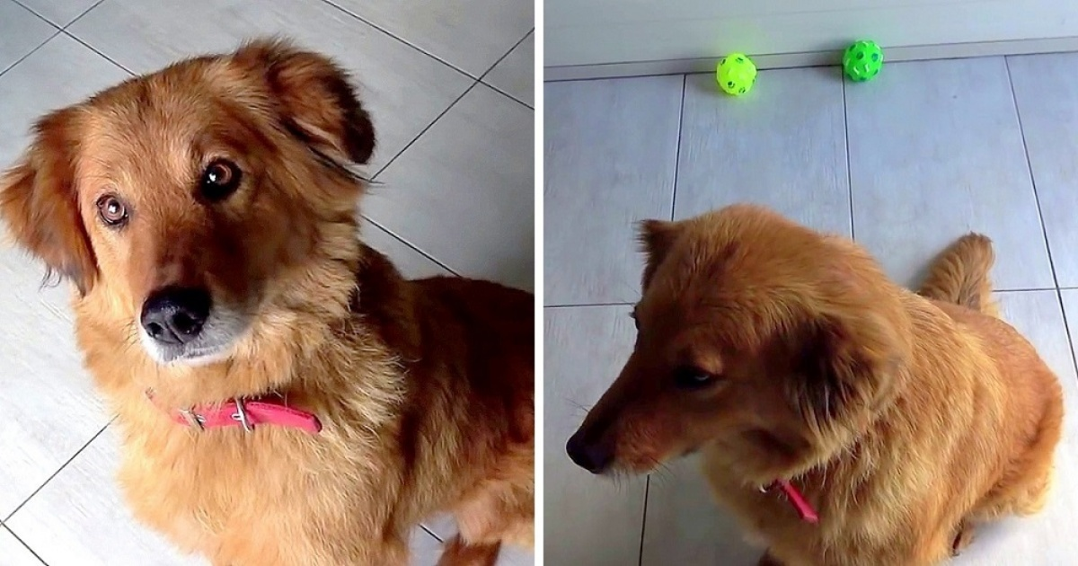 La storia del cane Indy