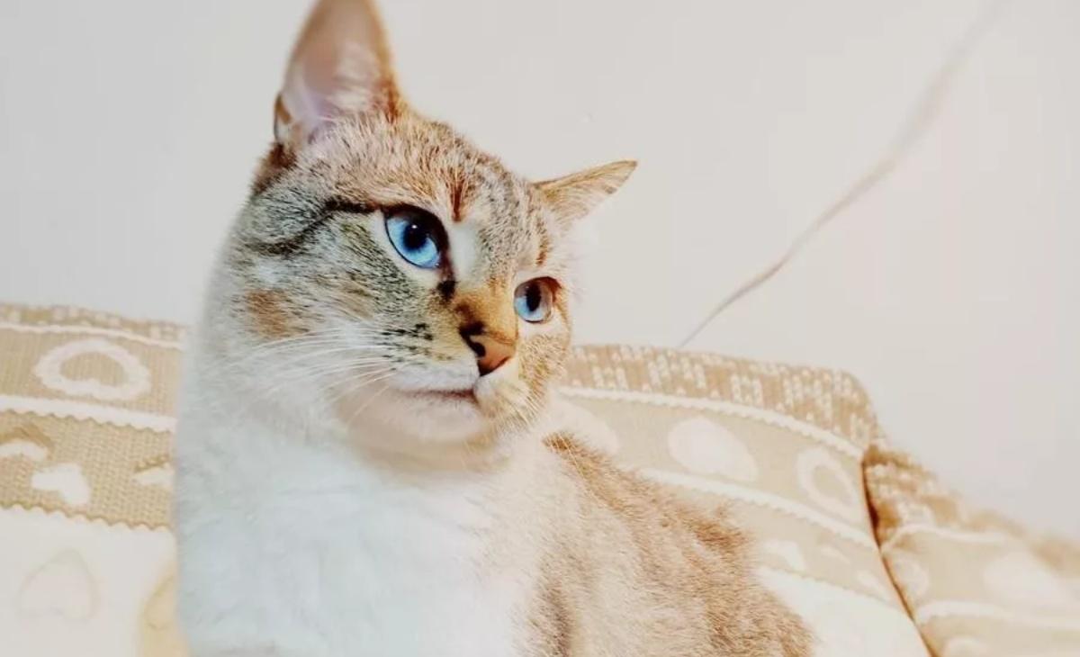 Jackson Avery, il gatto riportato indietro
