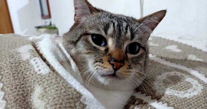 La storia del gatto Jackson Avery: rimandato indietro dopo 2 anni