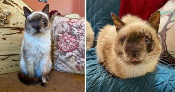 Khy, un gatto dal muso davvero dolcissimo