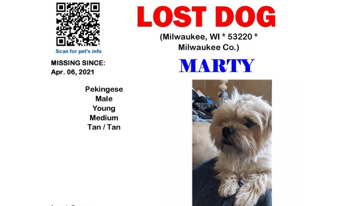 La brutta avventura della cagnolina Marty