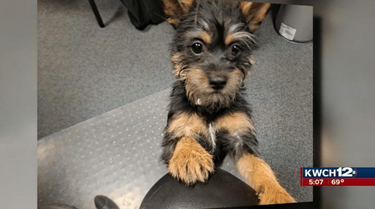 La storia della cagnolina Nora