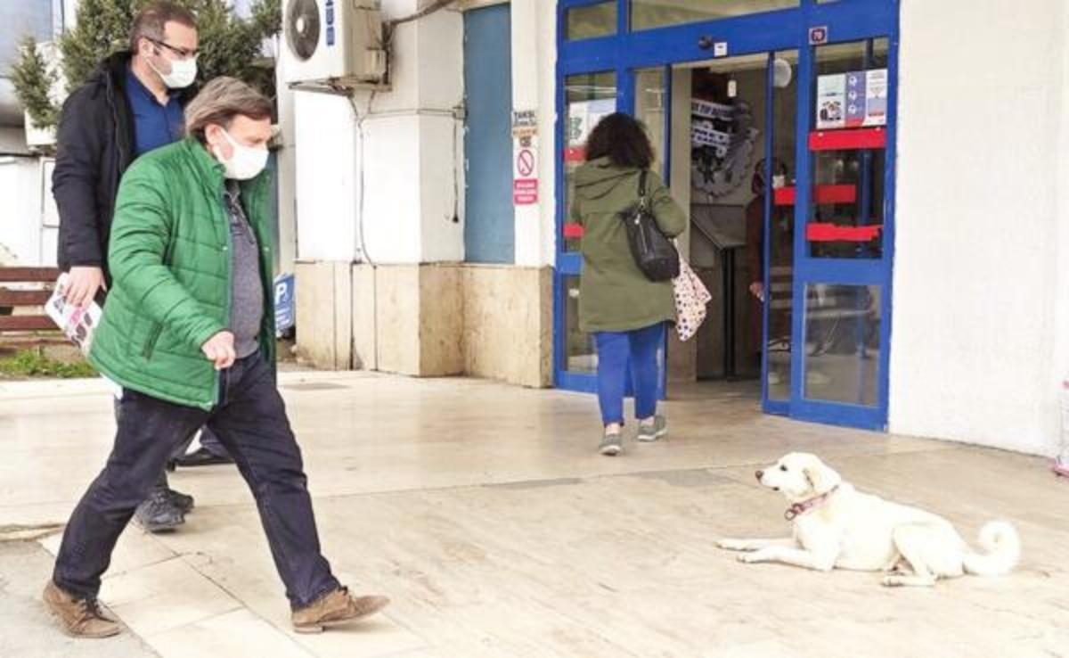 Pamuk aspetta il proprietario per 14 giorni