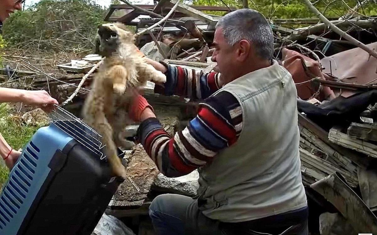La storia del cagnolino Pashok