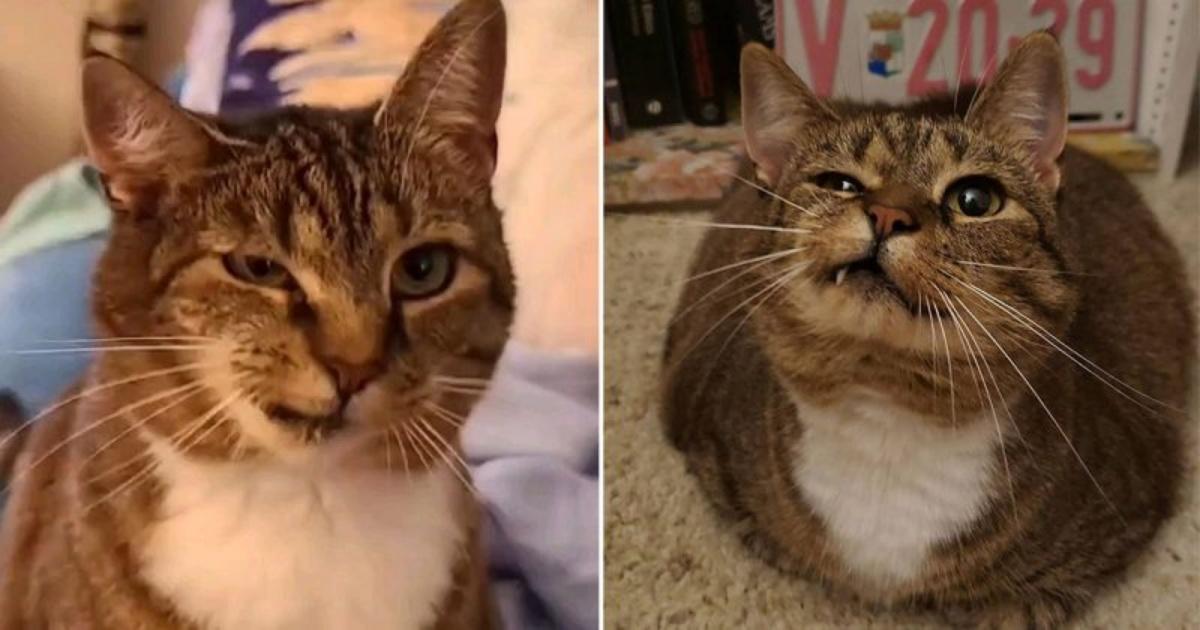 La storia della gatta Piddlesticks