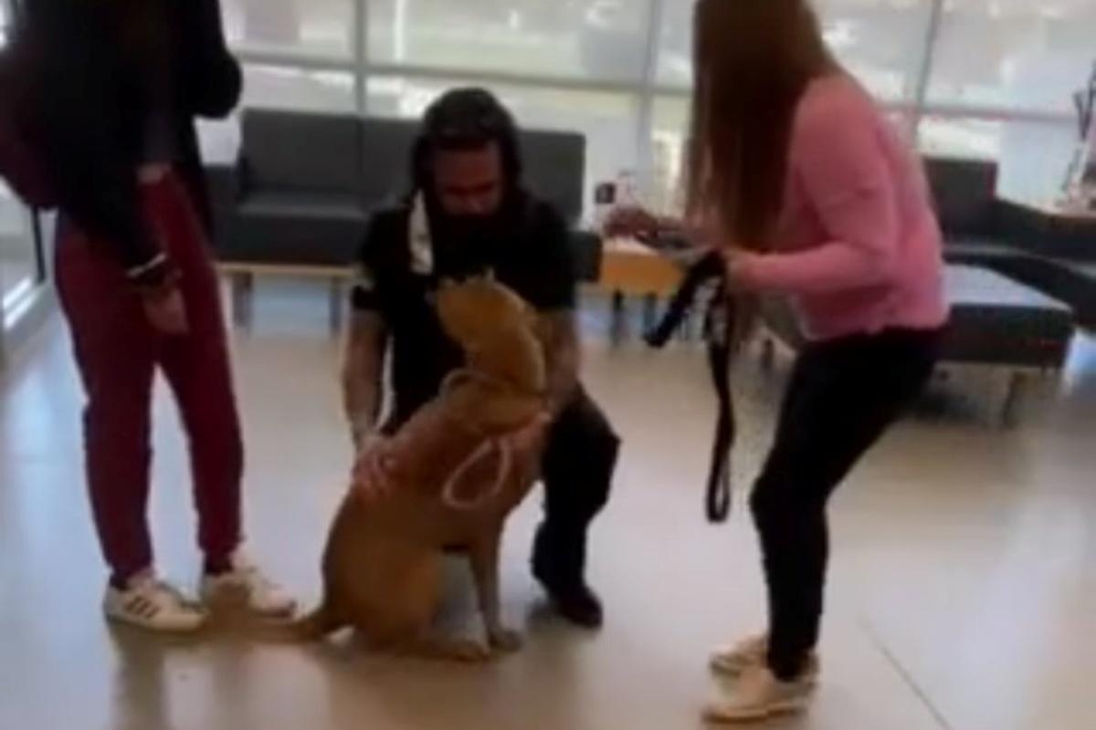 L'incredibilie ritrovamento del cane Sam