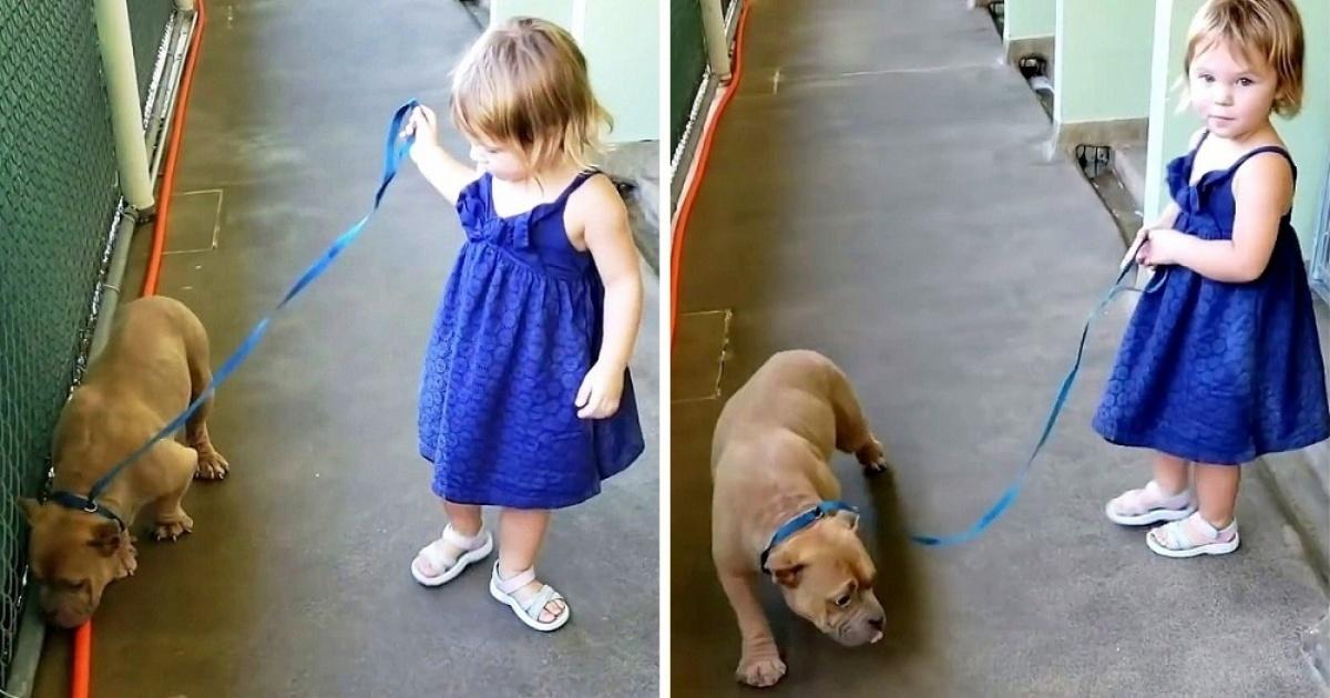 Il salvataggio della cagnolina Scarlett