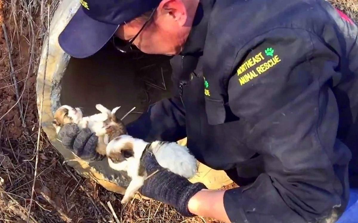Il salvataggio di Sierra e dei suoi cinque cuccioli appena nati
