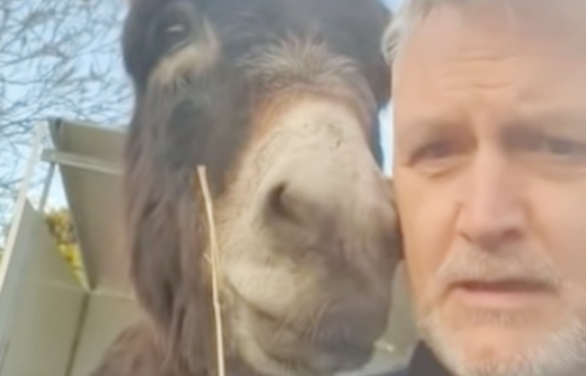 L'esilarante video dell'asinello Steve