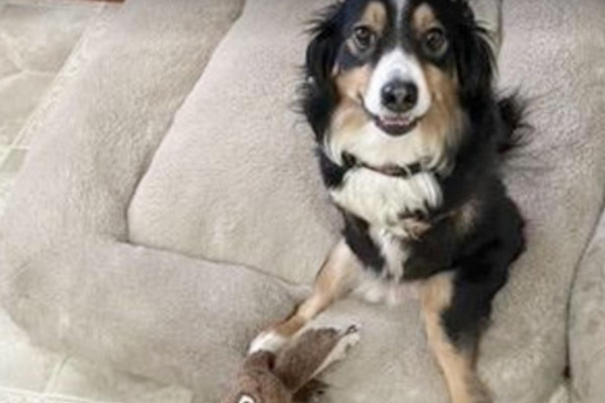La storia del cagnolino disabile Tobi