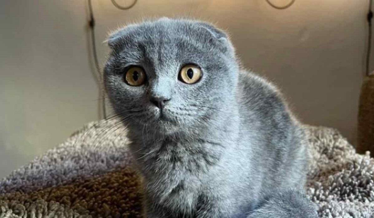 priscilla gatto