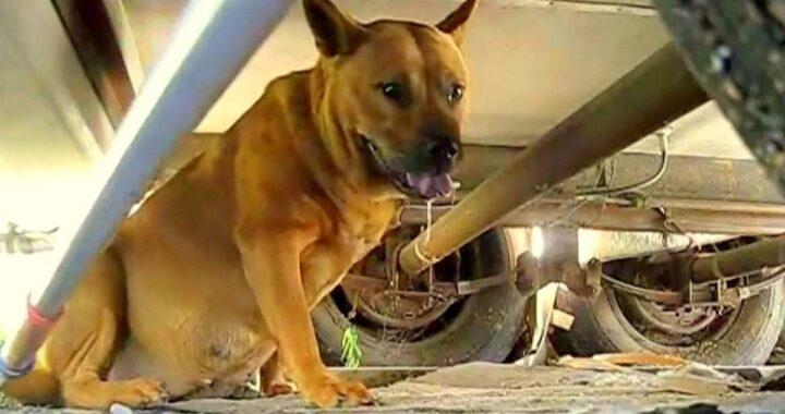 Il salvataggio della cagnolina Victoria