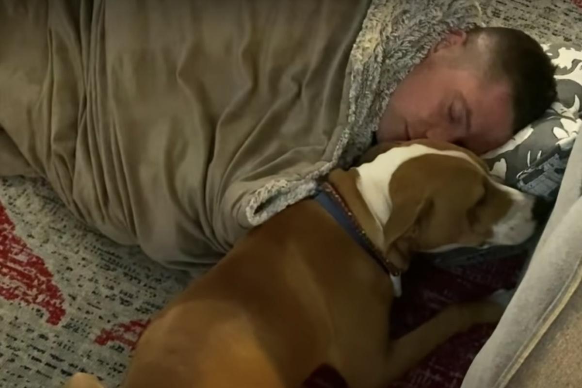 La nuova amicizia del cagnolino Willie